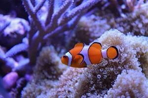長浜高校の水族館部の魚