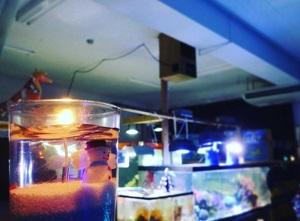 ながこう水族館